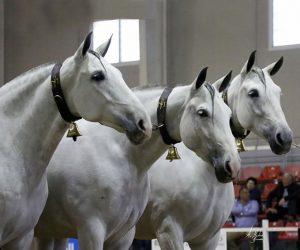 comprar caballos españoles
